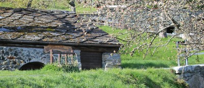 traditional hut with blossoming apple tree