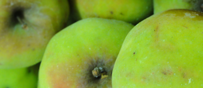 detail of green apples