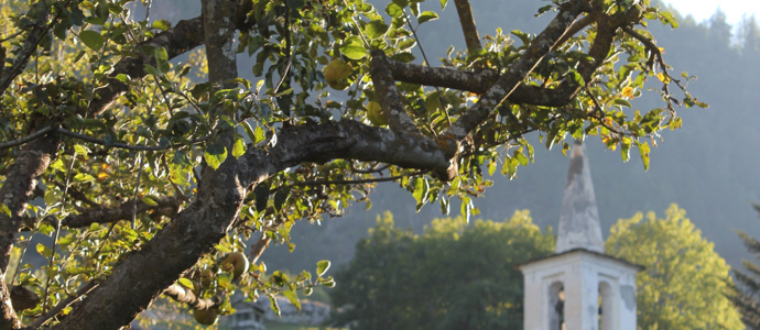 apple tree and bell tower
