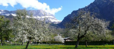 Valle d'Aosta Mountains among apple trees