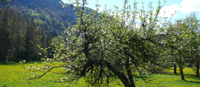 valley with apple tree